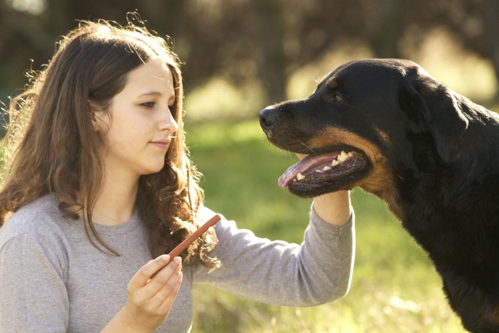 Du får både komma ut, gulla med en härlig hund och tjäna lite extrapengar