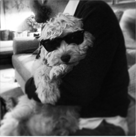 Harry-styles