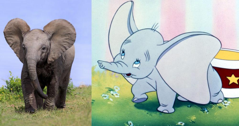 Dumbo blir ny Disneyfilm (med riktiga bebis-elefanter!)
